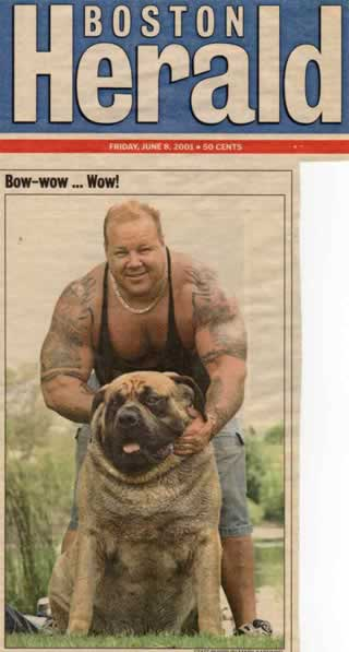 Huge dogs in the world